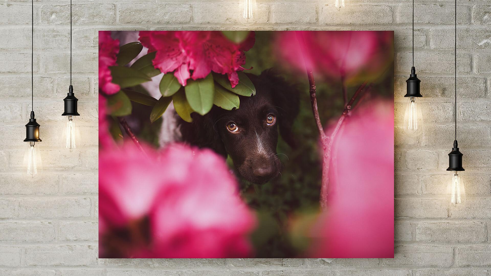 sabine fallend deine fotografin für katzen und hunde in graz  hund katze und maus in szene gesetzt #13