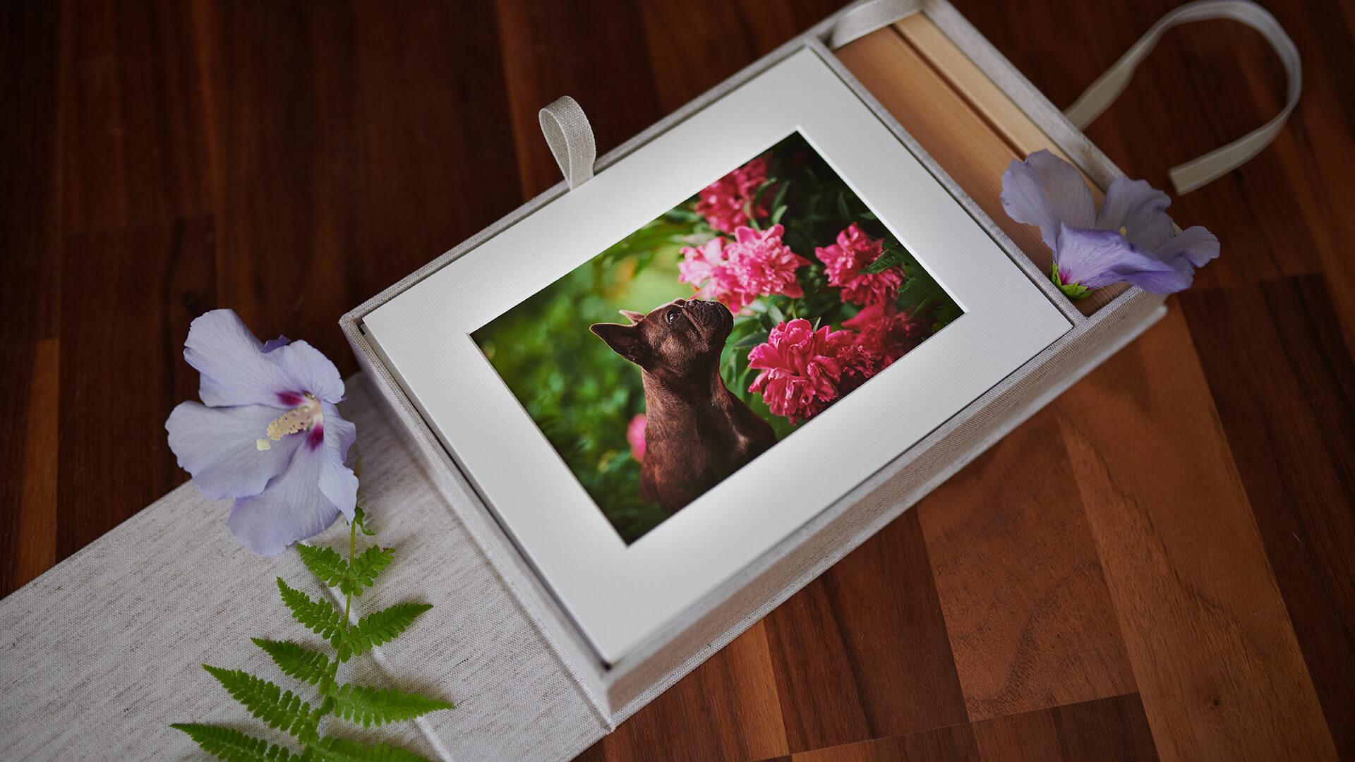 sabine fallend deine fotografin für katzen und hunde in graz  hund katze und maus in szene gesetzt #15